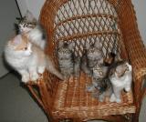 Kittens posing at almost 11weeks