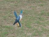 83. a bird in flight