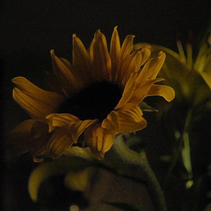 25a Nov 04 - Sun Flower