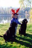 Reindeer with Two Black Labs