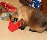 cat in bagcropped.jpg