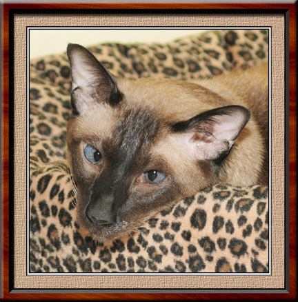 Nemie in leopard bed4email.jpg