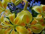 Asiatic Lilium & Brodiaea.