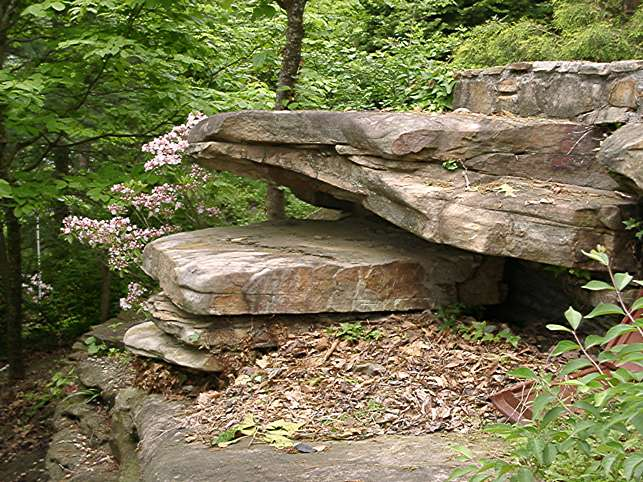 Mountain laurel and rocks