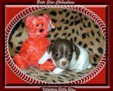 Valentine Baby Boy