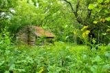 Another View - Old Shack and Wild Flowers