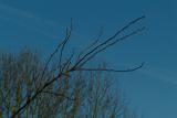 DSCF4245_tree limb50.JPG