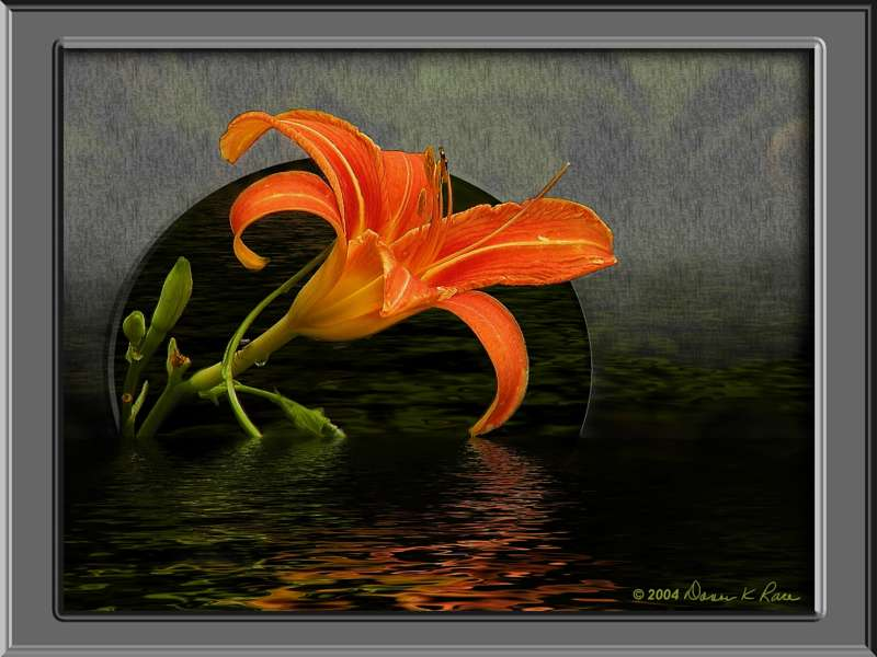 <b>Day Lily Flood</b> ~ created 11/30/04