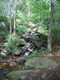 Loyalsock Creek and World's End State Park