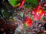 Dew drops and flowers