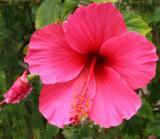 IMG_4275 flowers.jpg