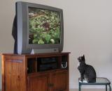 Video Catnip