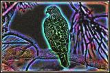#4 - Red-tail-Hawk