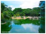 Flamingo Lake
