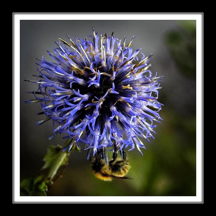 Frizz-bee (2833)