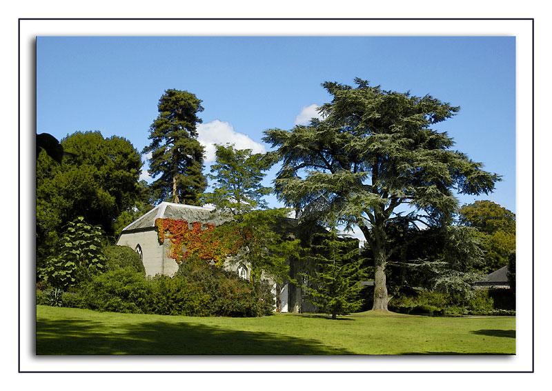 Saltram ~ gallery and cedar tree
