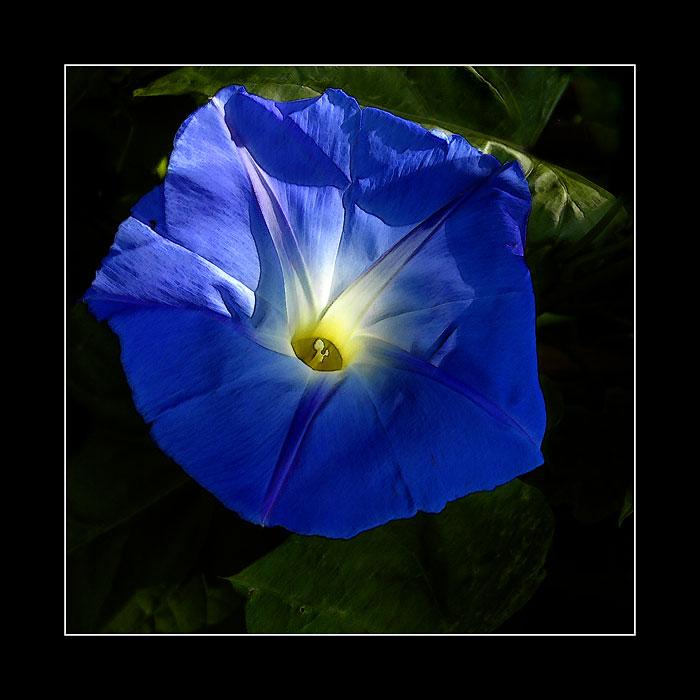 Startling blue (2999)