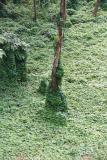 O Bosque, Amazonas
