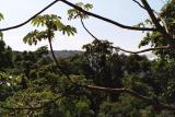 El Bosque, Parque Nacional Iguazú