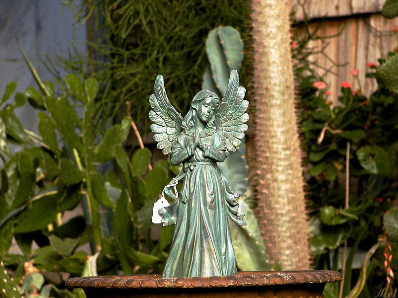 Angel.jpg(253)