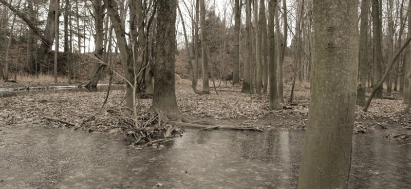 Swampy Panoramic