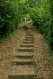 The McLehose Trail: Stage 7 and 8 (°w¤s, ¯ó¤s, ¤j´U¤s)
