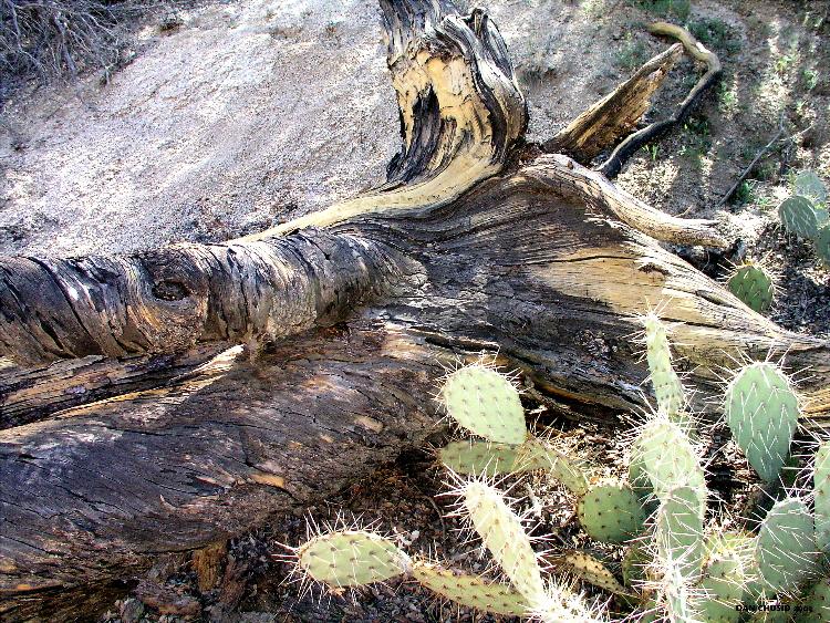 Deadwood & Cactus