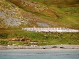 Grytviken cemetery and Shackletons gravesite