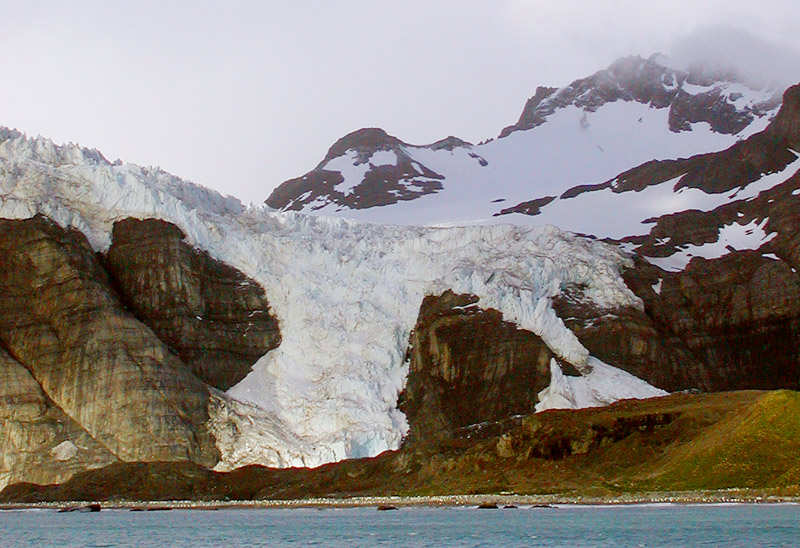 Gold Harbor Glacier and King Penguin colony