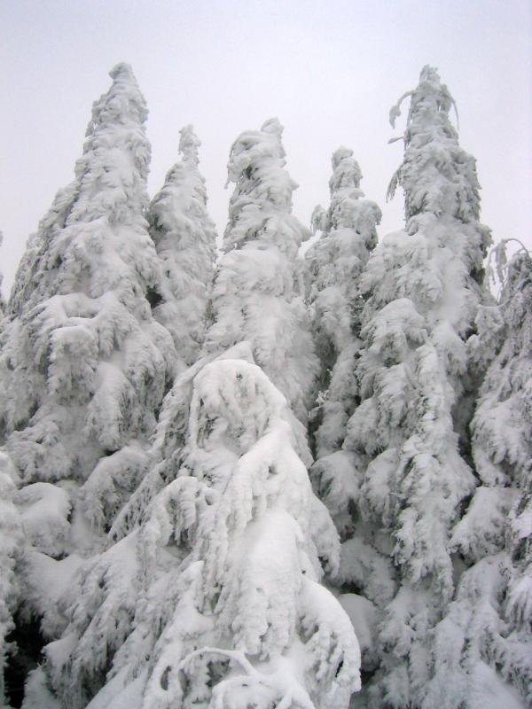 Trees on T1
