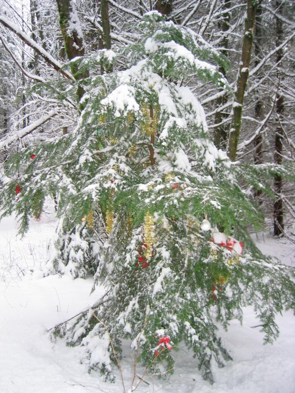 Tiger Christmas Tree -- After shaking the snow off