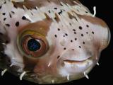 Oly 5050 Underwater 2...2003