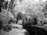 Wall--Palms-IR-wb.jpg