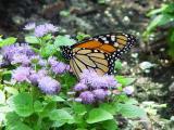 Monarch-Folded2-wb.jpg