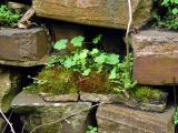 Mossy-Brick-in-Wall-wb.jpg