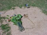 193. visiting Tarina on March 22, 2003