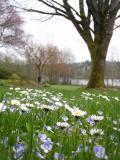 Spring Flowers at Deer Lake
