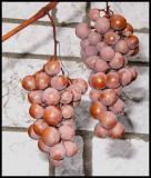 GrapesTurning