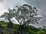 Tree in Silouette