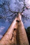 Tree at Watamu Temple