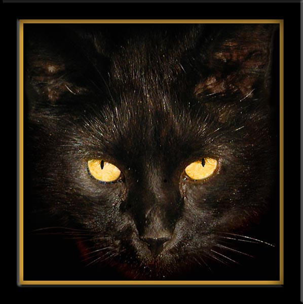 Two Yellow Eyes