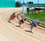 Racing Greyhounds, Lorena, TX