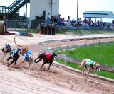 March 2003 Greyhound Preliminaries In Lorena