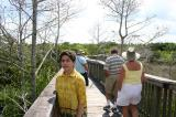 boardwalk in the glades