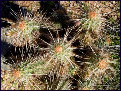 Cactus20.JPG