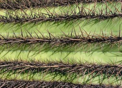 cactus28.JPG