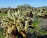 Cactus9.JPG
