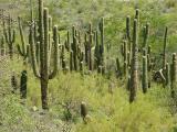 Cactus24.JPG