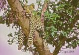 leopard-24.jpg