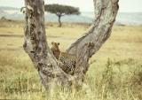leopard-56.jpg